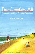 Beachcombers All: Exploring the New England Seashore